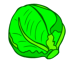English words: cabbage