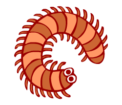 English words: centipede