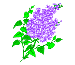 English words: lilac