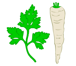 English words: parsley