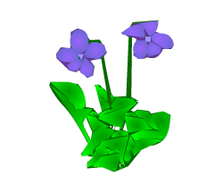 English words: violet