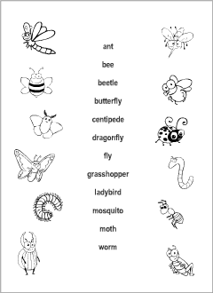 Writing A Topic Sentence Worksheet Excel Insects Vocabulary For Kids Learning English  Printable Resources Grade 3 Geometry Worksheets Word with Indefinite And Reflexive Pronouns Worksheet Esl Resources For Teachers And Students Divide Integers Worksheet